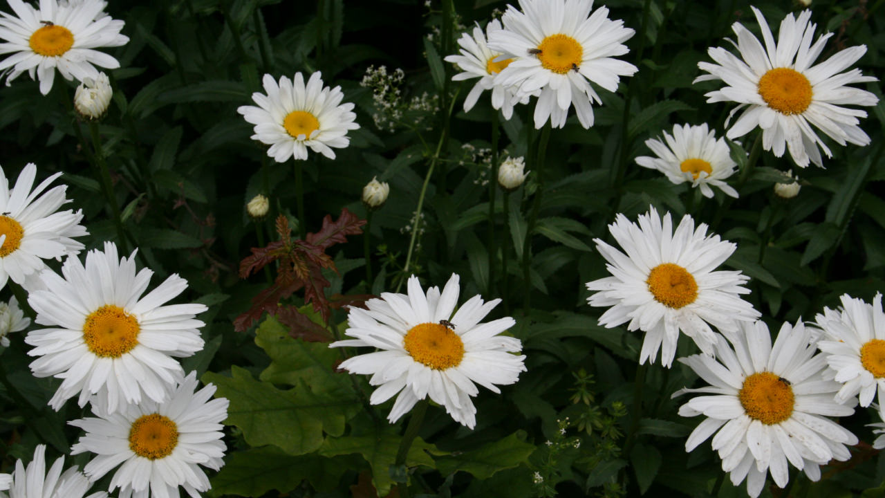 Daisies are so simple, if only life were so